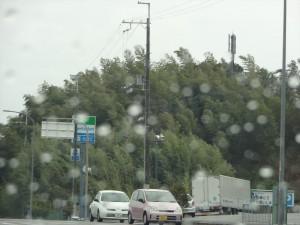 竹林が右往左往