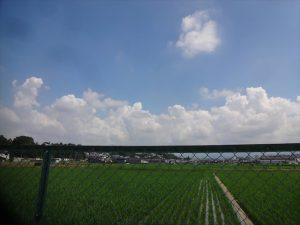青い空と稲