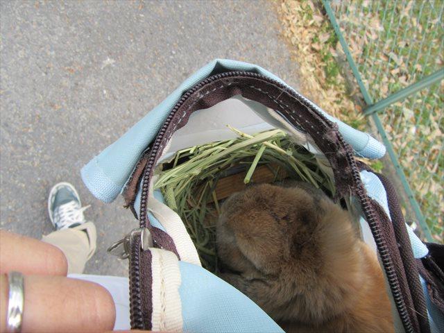 バッグの中で大人しいちゃもさん
